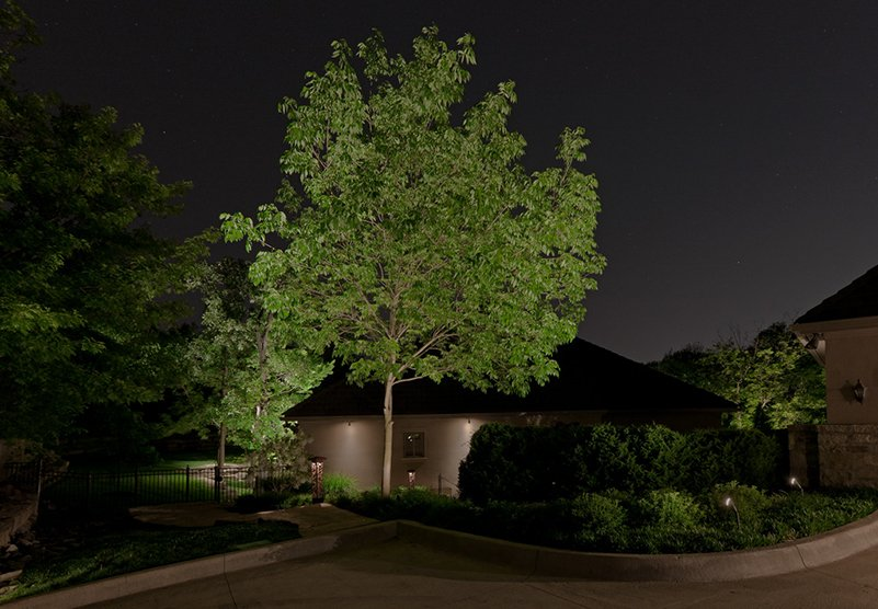 a tree with light at night